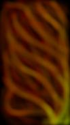 Lungs - Copyright © http://heatherbutton.com