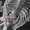 Whale Bones. Image by Heather Button – Copyright © http://heatherbutton.com